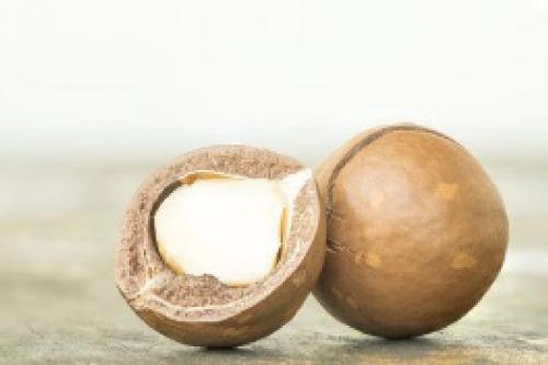 マカデミアナッツ油イメージ